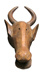 Cow Mask (Misikoun) ; African, Bamana; Early to mid 20th century ; HU 2010.1.1