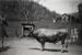 Photograph; Unknown; Circa 1910s; UAA-7