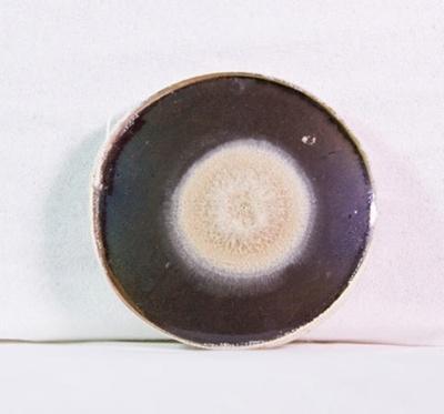 Pathology: Petri Dish of Penicillium Notatum; 1948; AR#4620