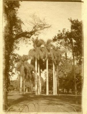 Postcard, Egypt; c. 1916; 018/005b