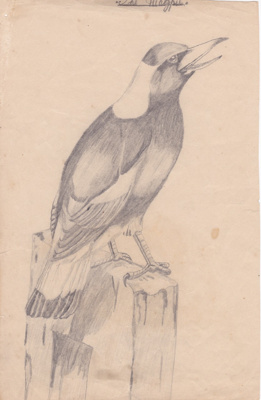The Magpie; Fred Hutchings; c. 1900; 018/007a
