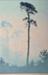 Pines; Oscar DROEGE, 1898-1983; n.d.; 1936_10