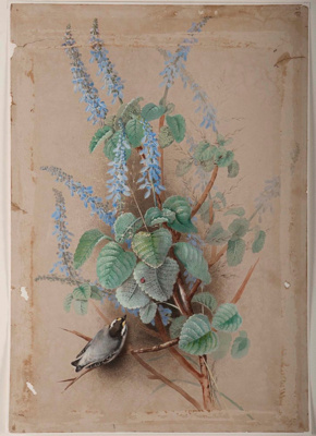 Bird and Flowers; Ellis ROWAN, 1848-1922; n.d.; 1945_19