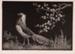 Spring; Lionel LINDSAY, 1874-1961; 1936; 1938_29