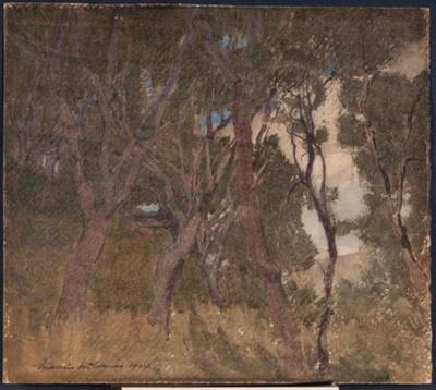 Cypress Grove, Monterey, California; John Francis McCOMAS, 1874-1938; 1904; 1941_9