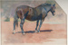 Study of a Horse; George W. LAMBERT, 1873-1930; 1895; 1945_25