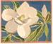 Magnolia Grandiflora; W.J. RICE; n.d.; 1934_71