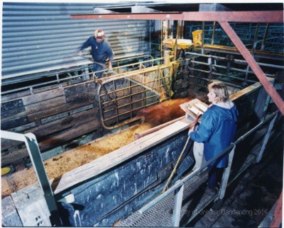 Man and a woman branding the cows; Mark Wilson; 1998; CCPDM28