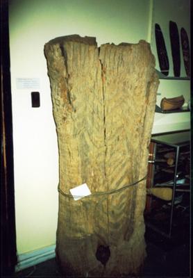 Aboriginal, Wiradjuri, carved tree (also known as a dendroglyph or arborglyph); 08-3041