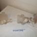 Walking Caliper Splint (Fully Supported); Allen & Hanburys Ltd; c1960; BC2015/306
