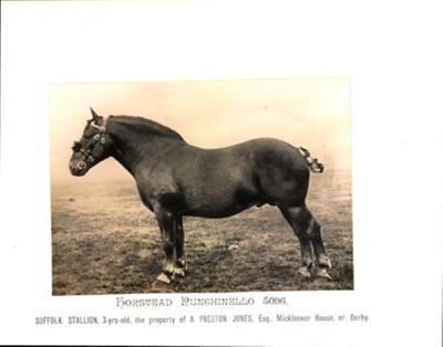 Horstead Punchinello 5096; 1924; SpHS-2-2-27-1