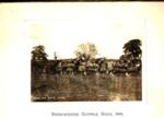 Photograph - Prize-Winning Suffolk Team 1909; 1910; SpHS-2-2-17-1