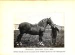 Photograph - Bawdsey Harvest King 3879; 1914; SpHS-2-2-19-2