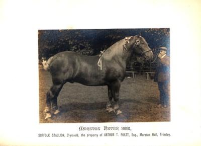 Photograph - Morston Peter 3681; 1912; SpHS-2-2-18-2