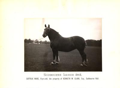 Photograph - Sudbourne Lassie 5915; 1914; SpHS-2-2-19-3