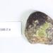 Glacial (?) stones (3); CR2012.588.2