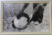 Photograph, panning for gold; Unknown; Unknown; CR1991.040