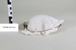 Schimmelbusch mask; Allen & Hanburys Ltd.; Unknown; CR1980.140.4