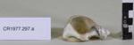 Serviette rings (2); Unknown maker; Unknown; CR1977.297