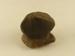 Amphibolite; SLNM.1962.21.63