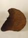 Elephant ear; SLNM.1965.28.10