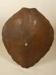 Tortoise shell; SLNM.1968.08.03B