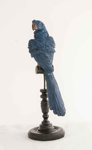 Medium Blue Parrot; JR00233.3