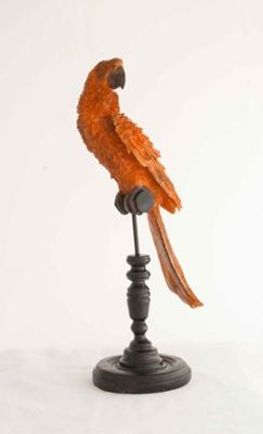 Medium Orange Parrot; JR00233.2
