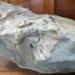 Fossil, Whale /Mātātoka,Tohorā; RA2019.361