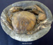 Crab Shell Fossil; RA2019.357