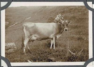 Photo Album, Kendall; K2001/37/e.1.1