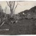 Photo, Single bull in paddock, house in background; RAP2020.0144