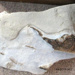 Fossil, Whale /Mātātoka,Tohorā; RA2019.362