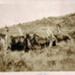 Photo Album, Pioi Station 1945 to 1952; 1987-1.8