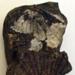 Fossil, Shell Mātātoka, Pūmoana; RA2019.290