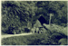 Photo, Cars on southern side of Mt Messenger tunnel; Fred Emmett; c1920; 2001/8.1b