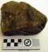 Fossil Kohatu/Stone; RA2019.304