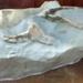 Fossil, Whale / Mātātoka,Tohorā; RA2019.360
