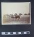 Photograph - Richmond Royal Horse Show; LDMRD 0132.10