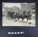 Photograph - Horse and Cart; LDMRD 0286.2