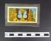 Butterfly picture card; Brooke Bond Tea; Richard Ward; LDMRD 0958.6