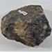 Fossil Ammonite; LDMRD 0080.2