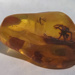 Spider and insect fossilised in amber; Arthropoda; amber (fossilised tree resin); Baltic coastline, Poland.; 2019.7