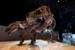 T-Rex Fossil Skeletal