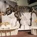 The mastodont from Ice Age Mammals