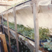 Arrdee Farm greenhouse, sprouts and small plants; FNPL2016.014.089