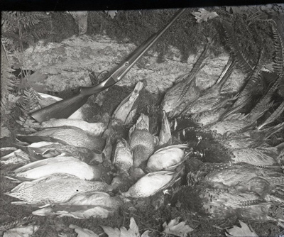 Photograph -  Still life, brace of birds with shotgun.; Aitken, John; 2017.1.305