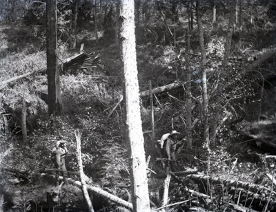 Photograph - Two hunters with rifles and a deer.; Aitken, John; 2017.1.211