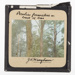Lantern Slide - 'Peculiar Formations on Bark of Tree', 1920-1940; J R. Kinghorn; 1920-1940; MV.MM.36326