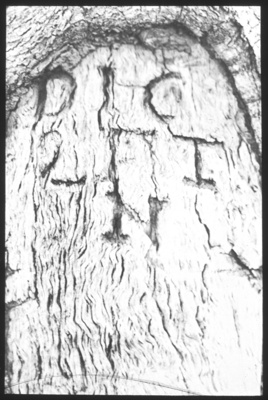 """Dig 2ft N"" [i.e. two feet North] carving in tree trunk [John Flynn?]; Flynn, John, 1880-1951; 1912-1955; HL.NL.17365348"